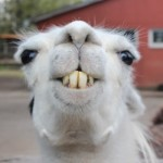 Про стоматологию в Швеции